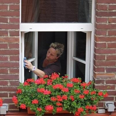 Fenster-Reinigung